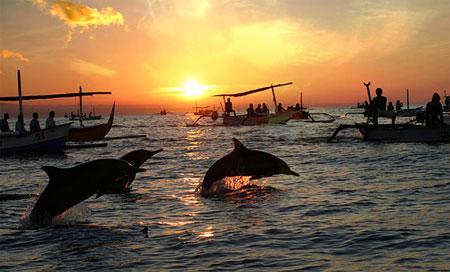 lovina beach dolphins